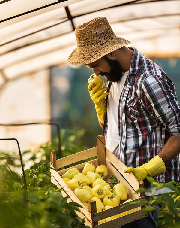 sector-agroalimentario_recursos-humanos_interim-aire (5)